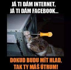 Good Humor, Good Jokes, Funny Texts, Funny Jokes, Internet, Marvel Jokes, Haha, Comedy, Funny Pictures