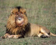 humorous animals images | Funny Photoshopped Animals - Funny Photoshop Animal 013 (FunnyPica.com ...