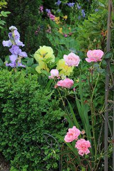 Fishtail Cottage: Fishtail Cottage Garden 5/25/15