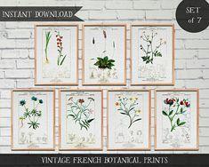 Vintage French Botanical Illustrations Set of 7 prints