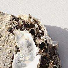 Hidden gem 🐚 Minimalist Earrings, Rings For Men, Gems, Design Inspiration, Detail, Simple, Jewelry, Men Rings, Layout Inspiration