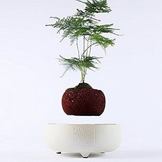 Amazon.com: Japanese style Levitating Air Bonsai Pot - Magnetic Levitation Suspension flower (White): Home & Kitchen