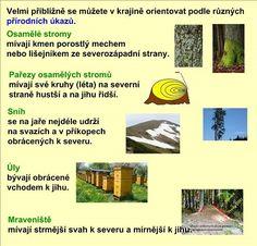 ZPŮSOBY ORIENTACE V KRAJINĚ :: Béčko-Tc School, Children, Ideas, Young Children, Boys, Kids, Thoughts, Child, Kids Part