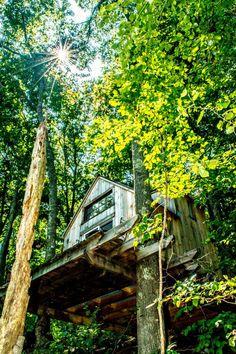 Wee House - Homem em busca de uma vida mais simples constrói casa na floresta com menos de 4 mil dólares.