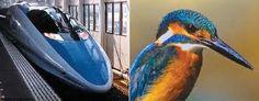 This little Kingfisher's beak helped Japan design a quieter train.