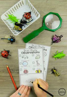 Observe Bug Attributes – Preschool Science Activities - Kids education and learning acts Insect Activities, Preschool Science Activities, Kindergarten Science, Preschool Lessons, Preschool Activities, Educational Activities, Preschool Pictures, Science Lessons, Preschool Bug Theme