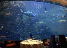 Dubai Underwater Restaurant | Unterwasser Restaurants | webfounds.com