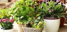 Cum imbunatatesti viata plantelor din ghiveci