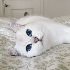 These cute kittens will brighten your day. Cats are wonderful friends. Pretty Cats, Beautiful Cats, Animals Beautiful, Lovely Eyes, Amazing Eyes, Stunning Eyes, Hello Beautiful, Absolutely Gorgeous, Beautiful Images
