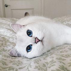 Resultado de imagem para nomes fofos para gatos femininos branco