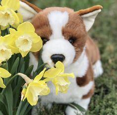 Pembroke Plush Corgi-20 Inch Design #corgi #corgicommunity #corgilovers Corgi Pembroke, Pet Toys, Plush, Dogs, Animals, Design, Animales, Animaux, Pet Dogs