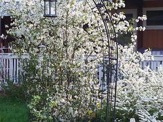 Keväthattaroita