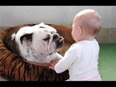 #Bulldogs and kids - this is so adorable!