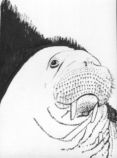 Image — pollux-manga #ink #drawing #sketch #illustration #walrus