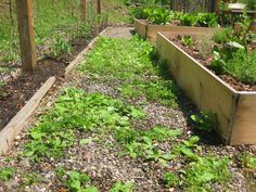 Got Weeds? Use Vinegar, Not Roundup - Occupy Monsanto