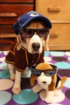 Beagle   ...........click here to find out more     http://googydog.com