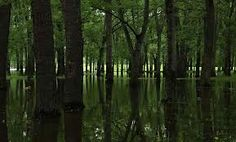 swamp at night - Google Search