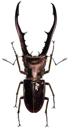 Insect specimen   Flickr - Photo Sharing!