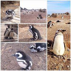 Puerto Madryn - 11 tips de923 visitantes