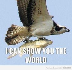 Aladdin bird