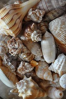 like the shells we got from Sanibel
