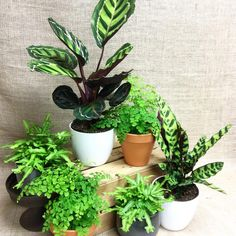 Mix and Match Tropical house plants