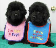 Really adorable pups