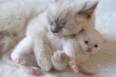 Precious! ♥