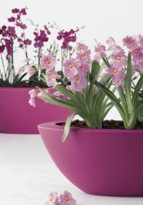 Tuinieren met Bakker » Alles over de Tuin en TuinierenKamerplanten - Informatie over Planten, Verzorging & Voeding