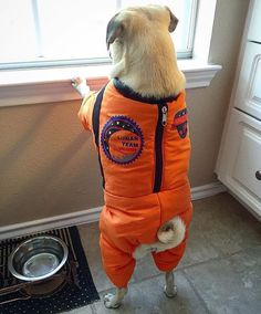 When I grow up I want to be the first pug in space! - @pippaprincesspug  Want to be featured on our Instagram? Tag your photos with #thepugdiary for your chance to be featured.