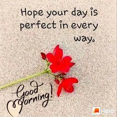 Good Morning Romantic, Good Night Dear, Good Morning Beautiful Quotes, Good Morning Roses, Good Morning Happy, Good Morning Photos, Good Morning Friends, Sunday Morning, Good Morning God Quotes