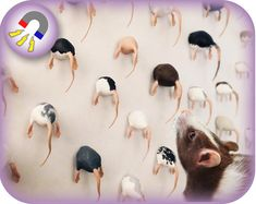 Hand Painted Fancy Rat Magnet | 3D printed | Custom Orders Available