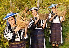 Romanian Wines and Vineyards - Jidvei Alba