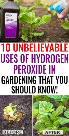 Healthy Garden Tip using epsom salt– Easy DIY gardening tips and ideas for begi… Uses Of Hydrogen, Hydrogen Peroxide Uses, Garden Yard Ideas, Lawn And Garden, Garden Loppers, Rocks Garden, Garden Rake, Smart Garden, Tomato Garden