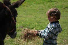 rencontre d'un petit garçon avec les ânes d'une maison d'hôtes dans l'Eure. Crédit photo J. Berquez pour Gîtes de France Normandie http://www.gites-de-france-normandie.com/