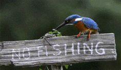 No fishing !!:-))