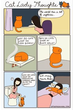 Mysteries of cat behaviour