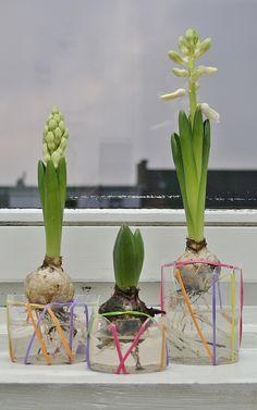 Hyazinthen Vasen - Upcycling