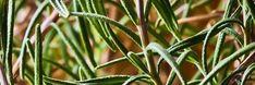 ハーブを濃縮!便利なハーブチンキの作り方と使い方 | ピントル Beauty Advice, Herbal Tea, Health And Beauty, Natural Remedies, Herbalism, Herbs, Nature, Plants, Herbal Medicine