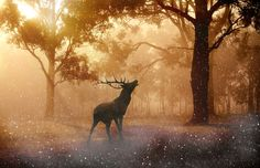 Deer - OGQ Backgrounds HD