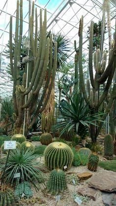 Succulent Bonsai, Cacti And Succulents, Cactus Plants, Agaves, Garden Paths, Garden Landscaping, Barrel Cactus, Black Garden, Cactus Blossoms
