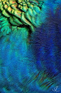 Bildergebnis für blue green