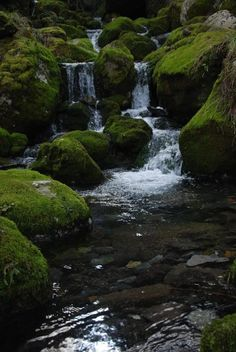 Nacimiento del Río Asón  #Cantabria #Spain Places In Spain, Vida Natural, Spain Travel, Holiday Destinations, Science Nature, Things To Do, Waterfall, Scenery, Around The Worlds