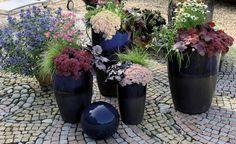 Herbstbepflanzung Für Töpfe Und Kübel. FavoritenBalkonPflanzenBlumenTerrasse