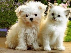 Adorable puppy and kitten