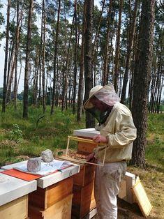 Silber Edelstahl Bienenzucht Rahmenhalter Bienenstock Barsch Kein Rost Werkzeug