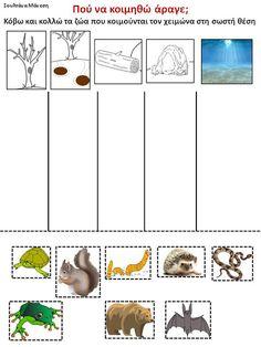Δραστηριότητες, παιδαγωγικό και εποπτικό υλικό για το Νηπιαγωγείο: Τα ζώα στο Νηπιαγωγείο: Ζώα σε χειμερία νάρκη Preschool Education, Preschool Crafts, Science For Kids, Science And Nature, Science Ideas, Winter Activities, Activities For Kids, Animals That Hibernate, Human Body Science