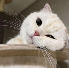 Your eyeballs pets cute - # eyeballs pets - Katzen - Animals I Love Cats, Crazy Cats, Cool Cats, Cute Baby Animals, Animals And Pets, Funny Animals, Pretty Cats, Beautiful Cats, Cute Kittens