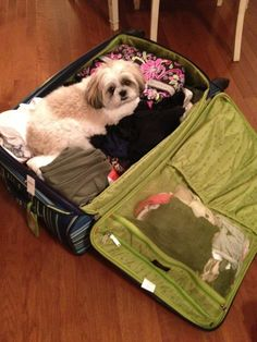 You're not leaving without me `Trixie
