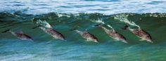 dolphins in a wave!!!